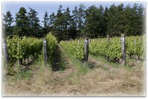liv vines