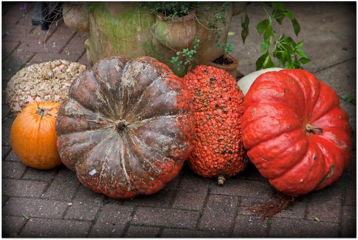 pumpkins-p