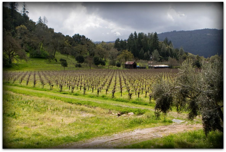 Venge Vineyards