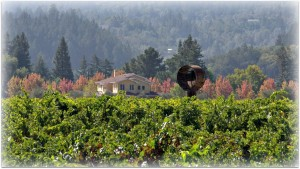 Wineormous at Corison Winery in St. Helena, CA
