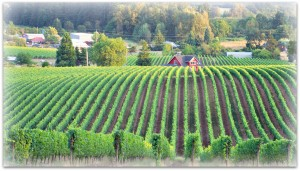 WINEormous-at-Sokol-Blosser-in-Willamette-Valley-OR