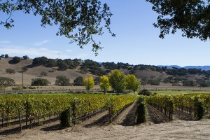 WINEormous in Santa Ynez