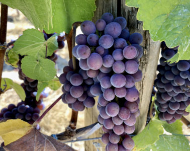 wine tours Temecula Willamette Valley