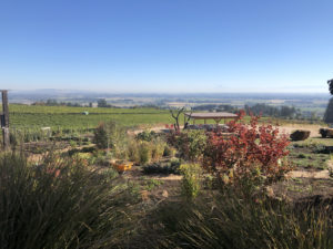 Temecula Winery Tours visits Willamette Valley