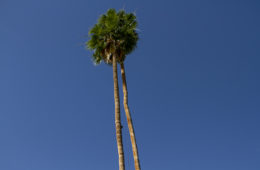 Temecula winery tour Palm Springs