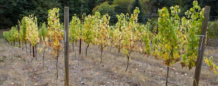 wine tour Temecula Tualatin Valley